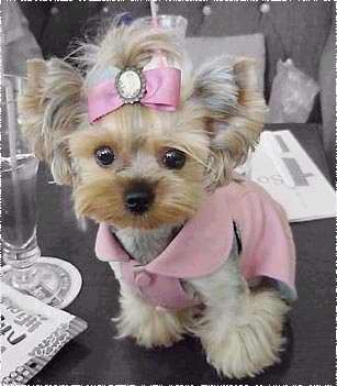 超可爱滴````小狗狗
