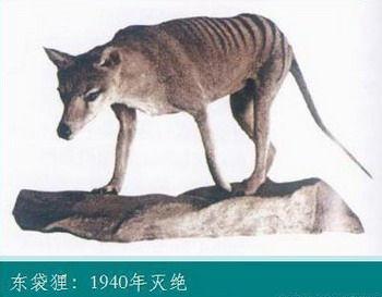 已灭绝动物大全 老虎满身斑纹形如狼(组图)