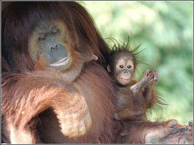 全球罕见动物即将灭绝