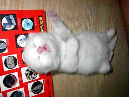 可爱猫咪抱枕头睡觉图片