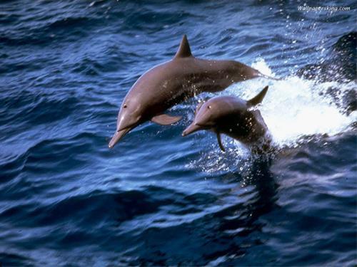 海豚身体结构图解