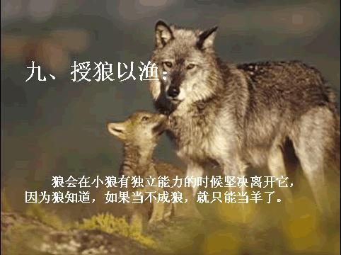 关于狼的电脑壁纸