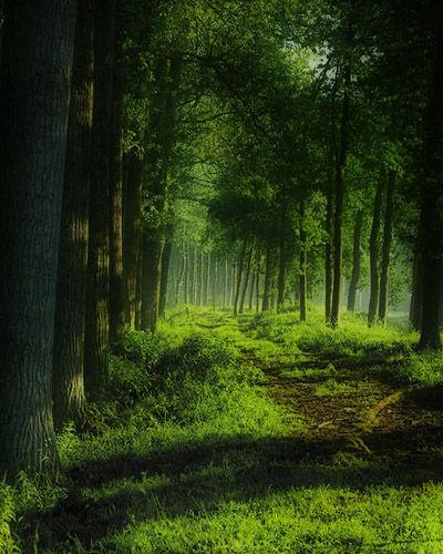 壁纸 风景 森林 植物 桌面 400_500 竖版 竖屏 手机